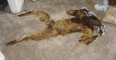 the-shocking-reality-of-crime-scene-cleanup-18-375x195 NSFW: The Shocking Reality of Crime Scene Cleanup