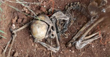historical-look-inside-the-body-farm-11-375x195 NSFW: Historical Tour Inside the Body Farm