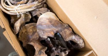 historical-look-inside-the-body-farm-19-375x195 NSFW: Historical Tour Inside the Body Farm